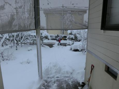 今朝の軽い雪_a0203003_2154152.jpg