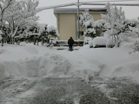 今朝の軽い雪_a0203003_21543535.jpg