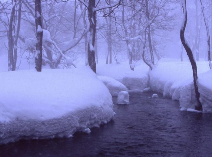 もの寂しい冬木立 (福島県北塩原村) : 日々の風景