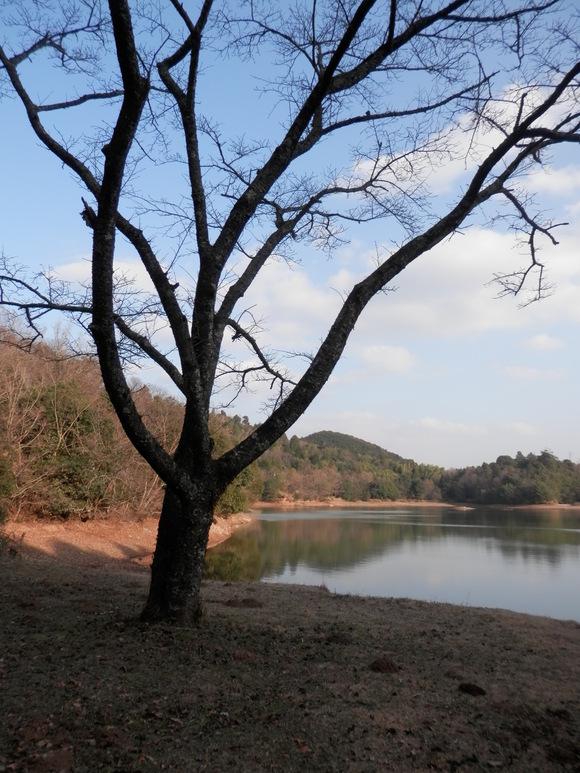 2013年「greengreenvillage日田」開拓日記です☆_a0125419_10583532.jpg