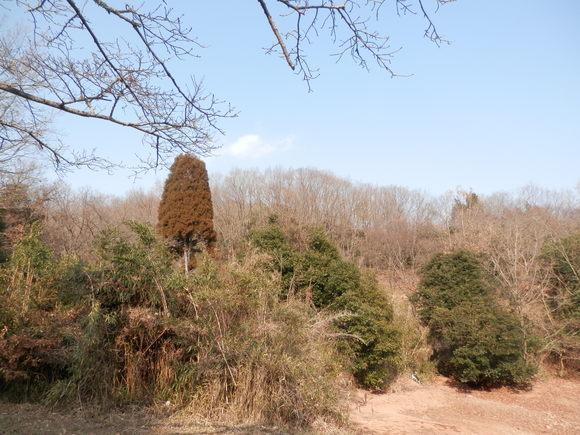 2013年「greengreenvillage日田」開拓日記です☆_a0125419_1113423.jpg