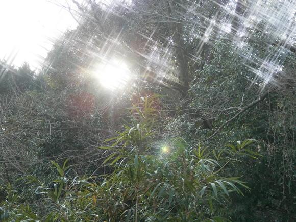 2013年「greengreenvillage日田」開拓日記です☆_a0125419_11195632.jpg