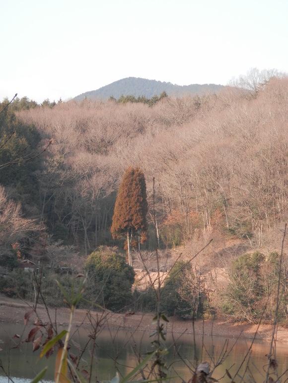 2013年「greengreenvillage日田」開拓日記です☆_a0125419_11222030.jpg