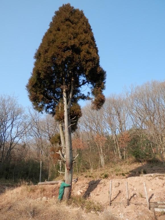 2013年「greengreenvillage日田」開拓日記です☆_a0125419_1124093.jpg