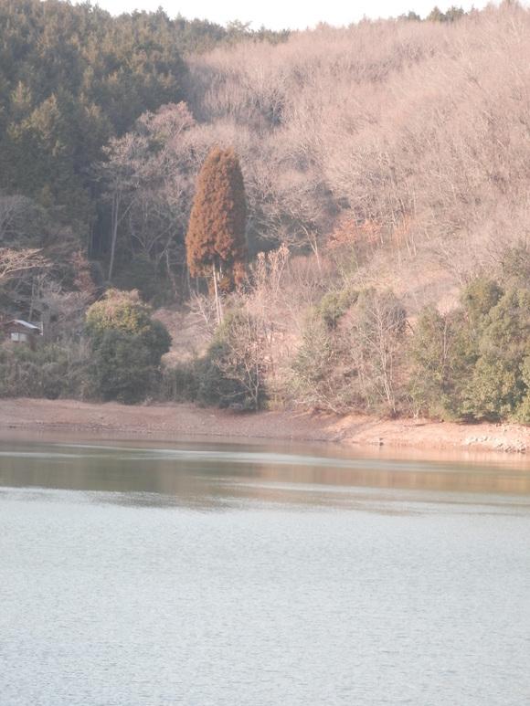 2013年「greengreenvillage日田」開拓日記です☆_a0125419_1125297.jpg