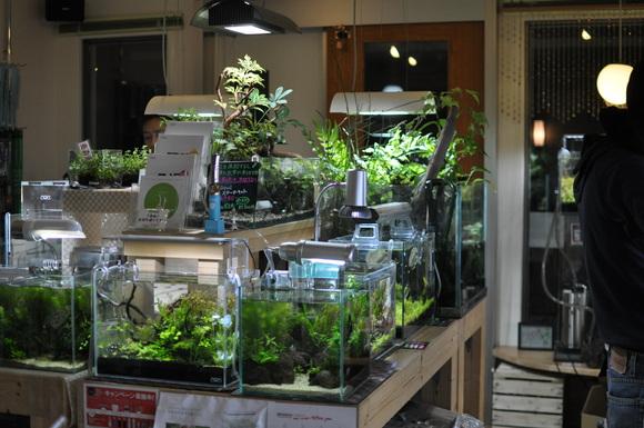 水草を買いに_a0262622_23414537.jpg