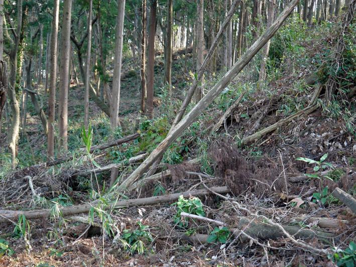 吃驚仰天、六国見山森林公園にカラスザンショウがびっしり_c0014967_221311100.jpg