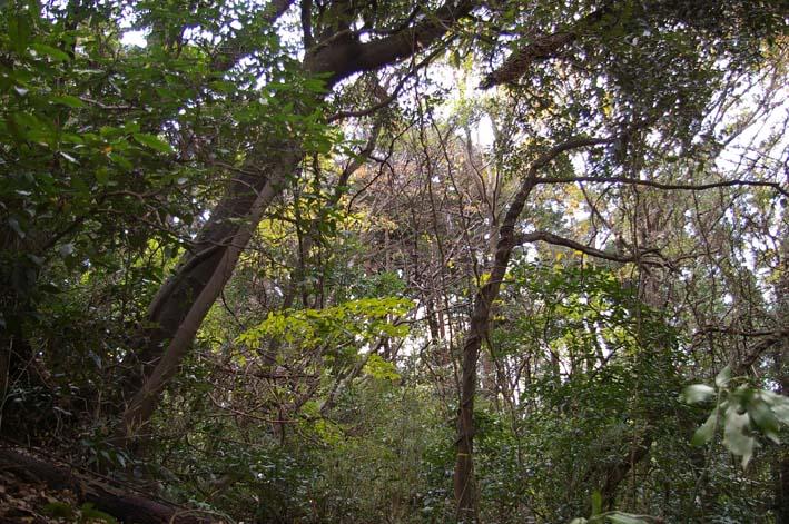 吃驚仰天、六国見山森林公園にカラスザンショウがびっしり_c0014967_22205917.jpg