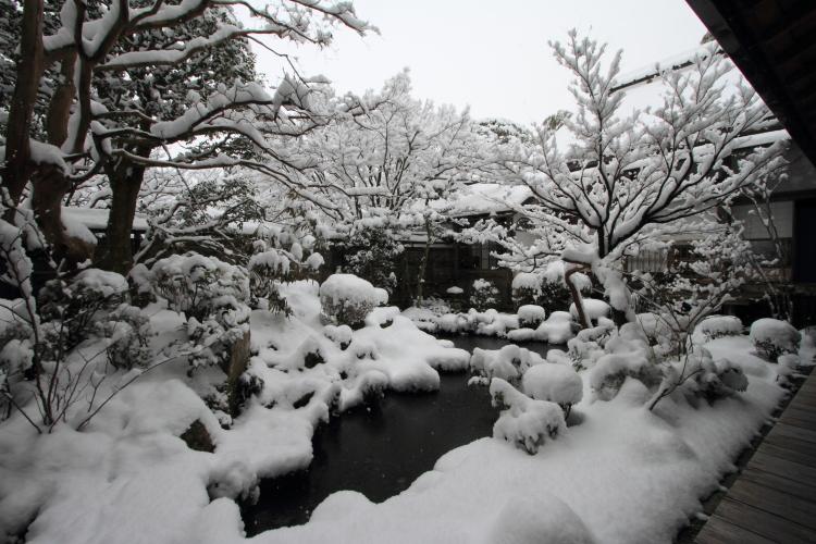宝泉院_e0051888_2314452.jpg