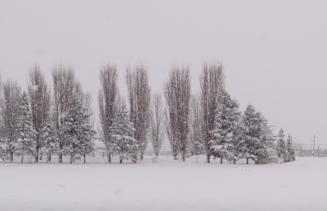 岩木川の雪景色など、ちょこっと_a0136293_15552891.jpg
