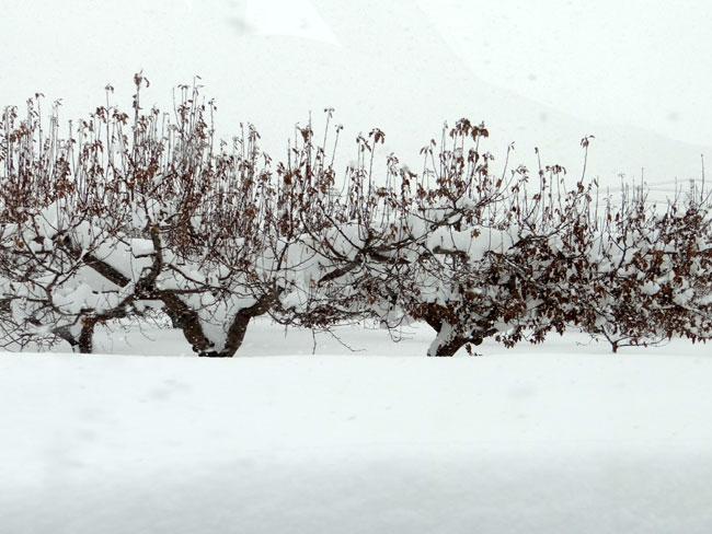 岩木川の雪景色など、ちょこっと_a0136293_15585099.jpg