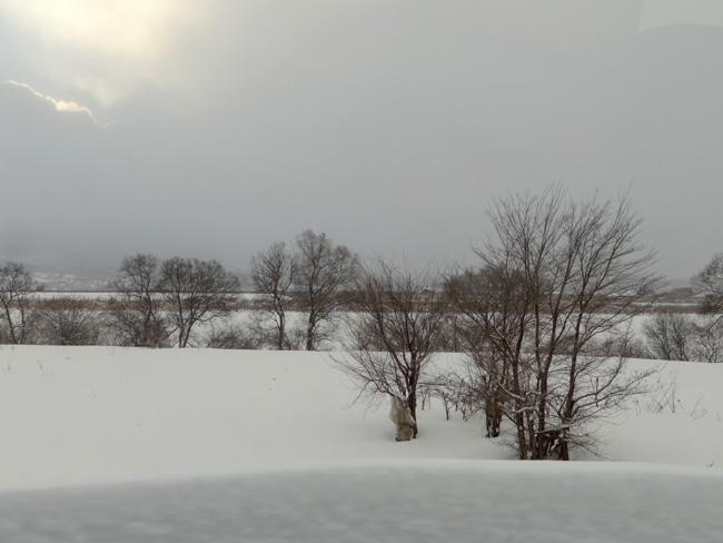 岩木川の雪景色など、ちょこっと_a0136293_1613637.jpg