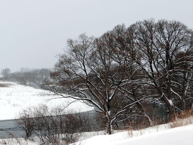 岩木川の雪景色など、ちょこっと_a0136293_164662.jpg
