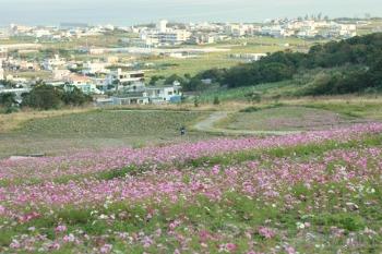一番桜とコスモスの花咲く丘_c0176406_20274190.jpg