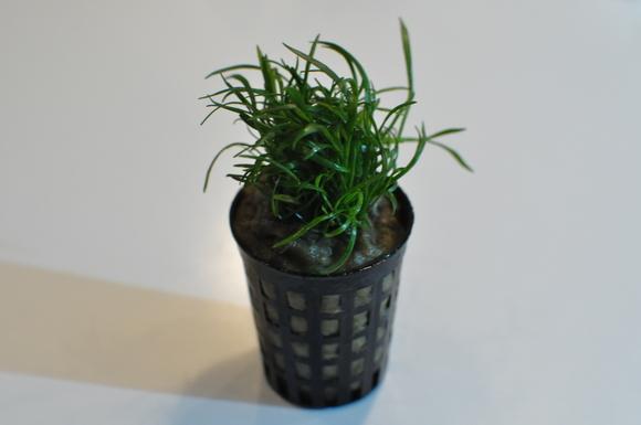 水草を買いに_a0262622_0292095.jpg