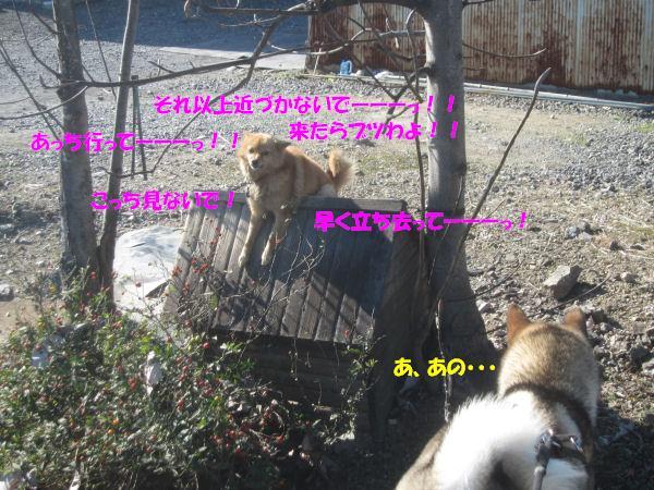 f0143123_20403447.jpg