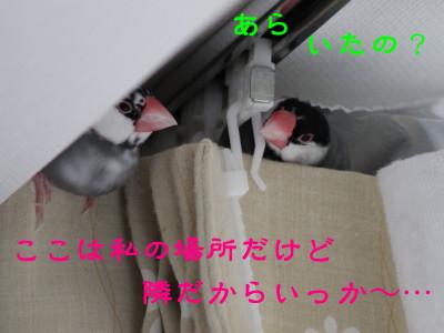 b0158061_20304511.jpg
