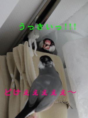 b0158061_20311343.jpg