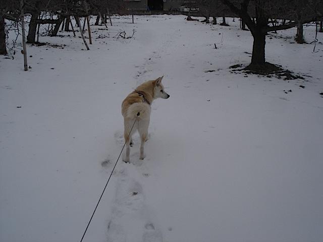 犬は元気 版画展スタート_e0019167_8224620.jpg