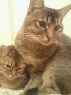 愛猫_f0061797_2239751.jpg