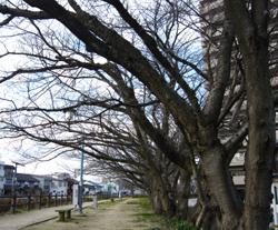 散歩_f0197821_14154759.jpg
