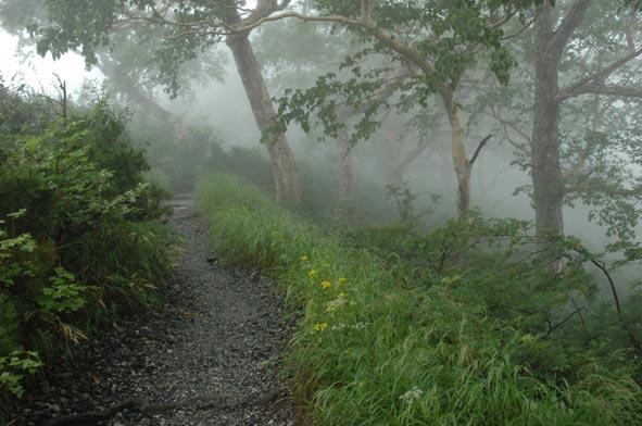 雨の八方尾根_a0147436_1611451.jpg