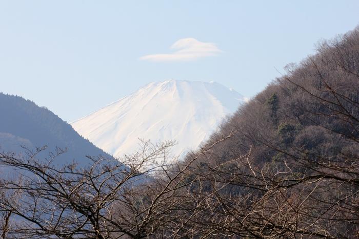 2013.1.12 丹沢湖(1)ノスリ_c0269342_22355585.jpg
