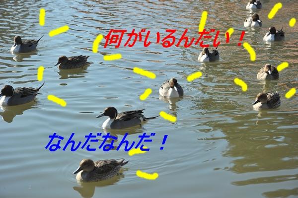 e0020166_20545041.jpg
