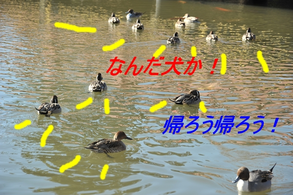 e0020166_20575774.jpg