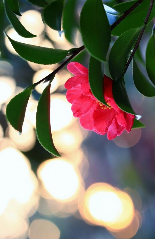 季節を楽しんで_e0305388_14151355.jpg