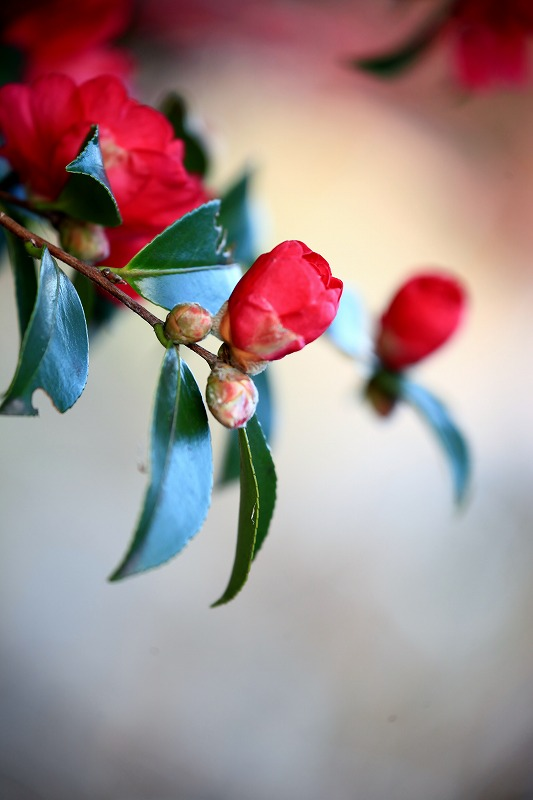 季節を楽しんで_e0305388_14154755.jpg