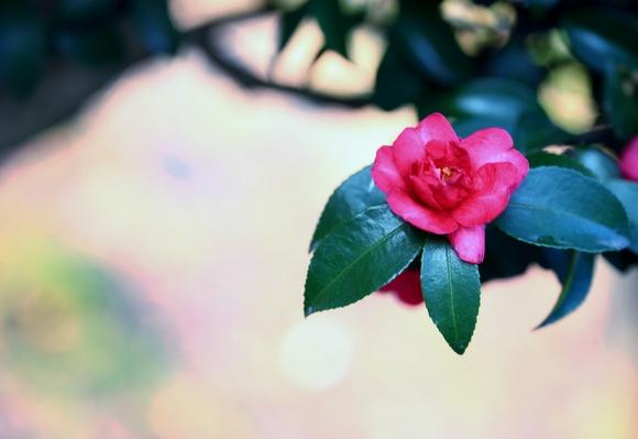 季節を楽しんで_e0305388_14161368.jpg