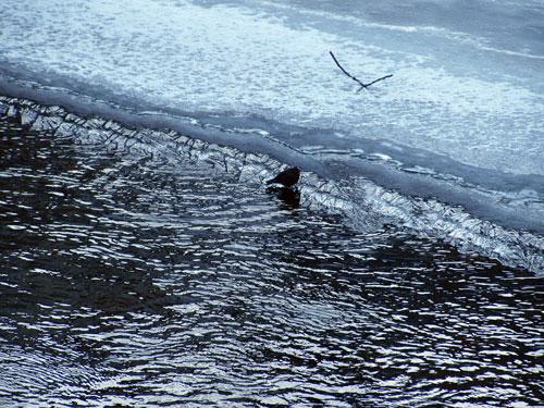 私の不思議な黒い鳥_f0236291_11593145.jpg