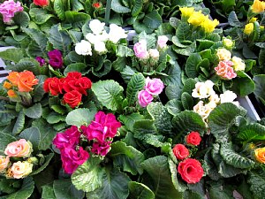 ジュリアンの花畑_c0141652_17362451.jpg