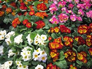 ジュリアンの花畑_c0141652_17363144.jpg