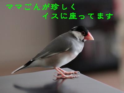 b0158061_2049386.jpg