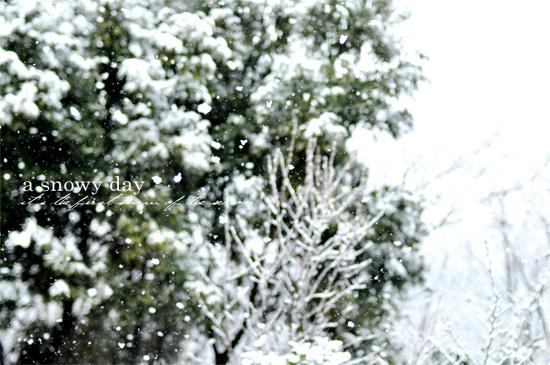 雪の日_d0174704_19105772.jpg