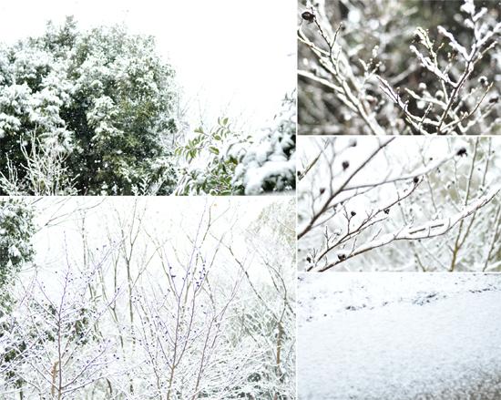 雪の日_d0174704_19192574.jpg