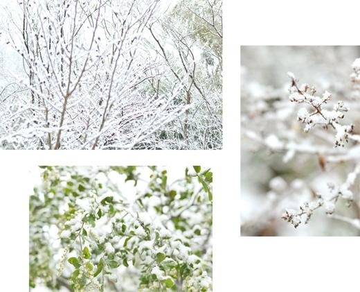 雪の日_d0174704_1927845.jpg