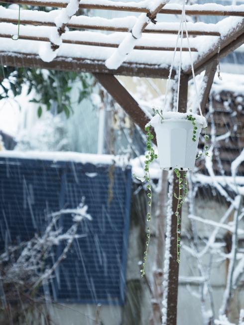 雪の日_e0276411_2033306.jpg