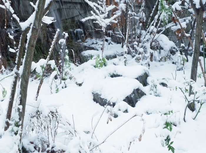 雪の日_e0276411_2033353.jpg