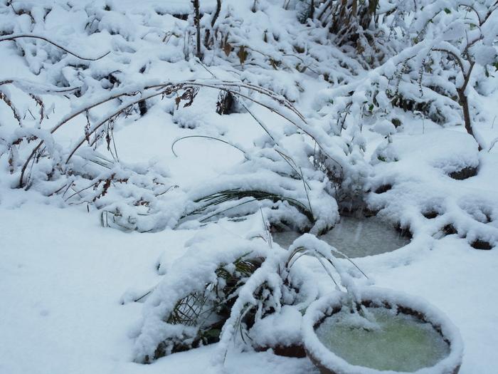 雪の日_e0276411_20335166.jpg