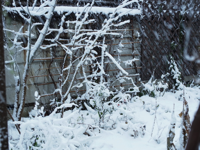 雪の日_e0276411_20341588.jpg