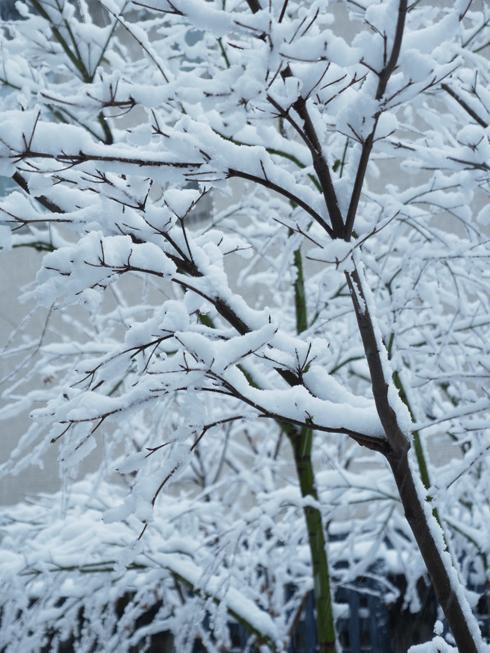 雪の日_e0276411_2034279.jpg