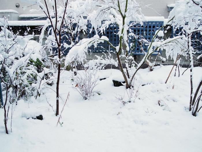 雪の日_e0276411_20345523.jpg