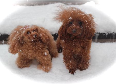雪♡_d0060413_15292188.jpg