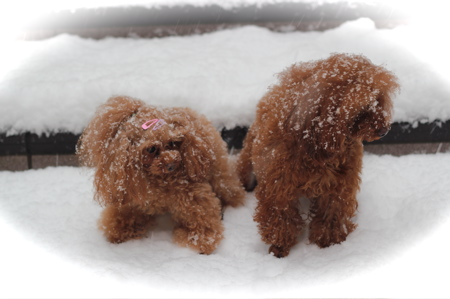 雪♡_d0060413_15293098.jpg