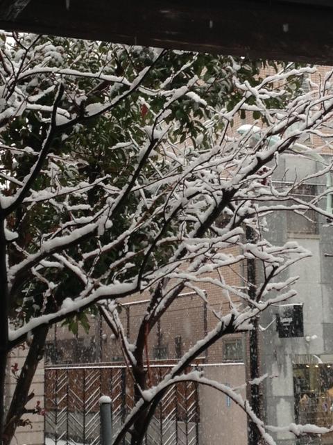 初雪_e0177713_15534023.jpg