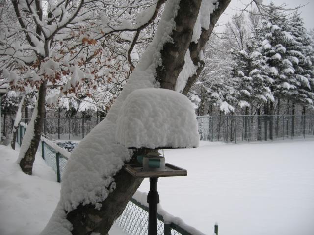 雪が積もりました。_f0146620_1775885.jpg