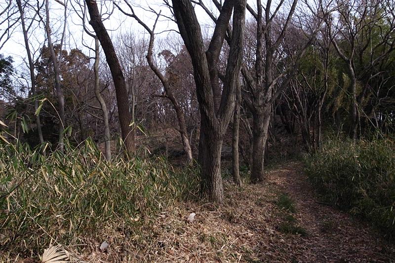 2013年1月 冬の多摩丘陵散歩_d0054625_0163765.jpg